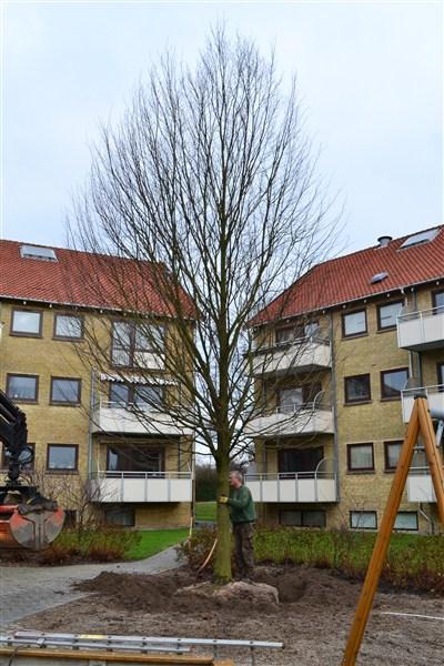 fældning af træ pris